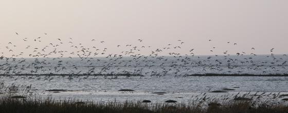 naturen - nationalpark Vadehavet